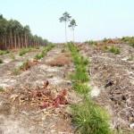 zalesianie lodz.lasy.gov