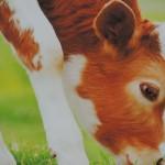 Konferencja dla właścicieli gospodarstw 13.03 (25)
