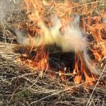 pożar, trawa, ogień