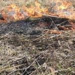 pożar trawy (7)