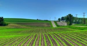 Rolnictwo ekologiczne
